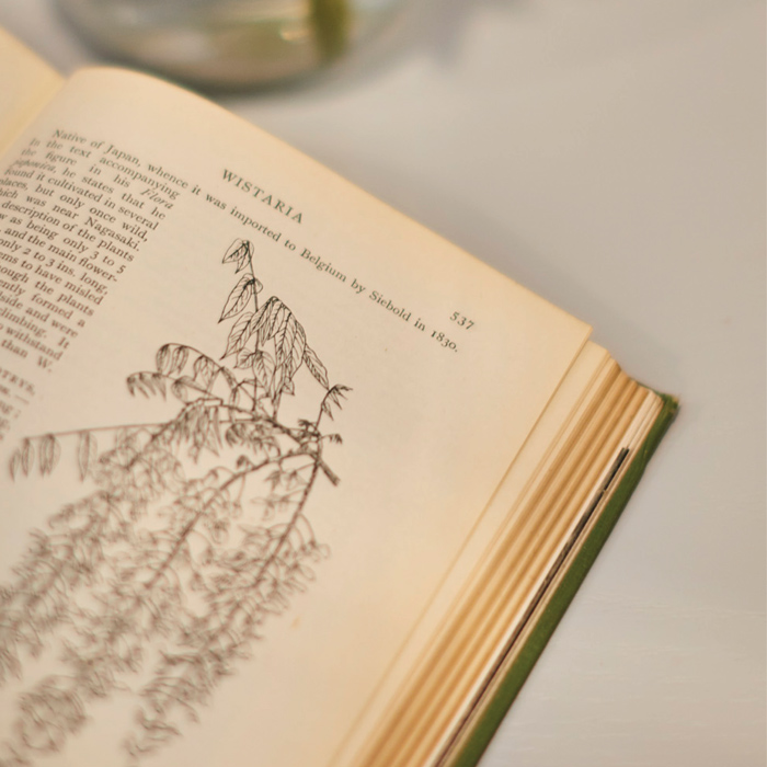 An incidental shot of an open book detailing the botany of wisteria